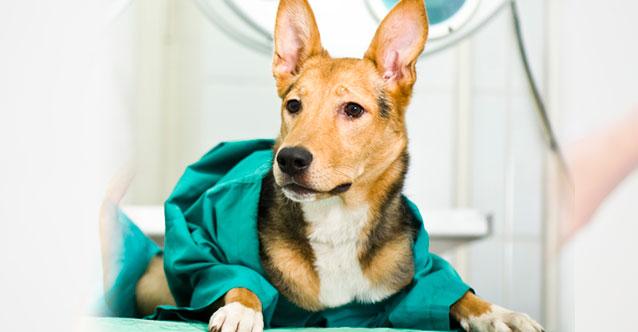 cirurgia veterinària a sabadell