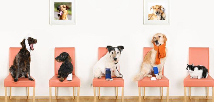 Consulta veterinaria en Sabadell