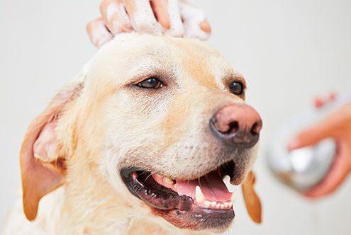 Perruqueria canina a sabadell